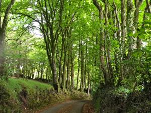 The old road to Chagford